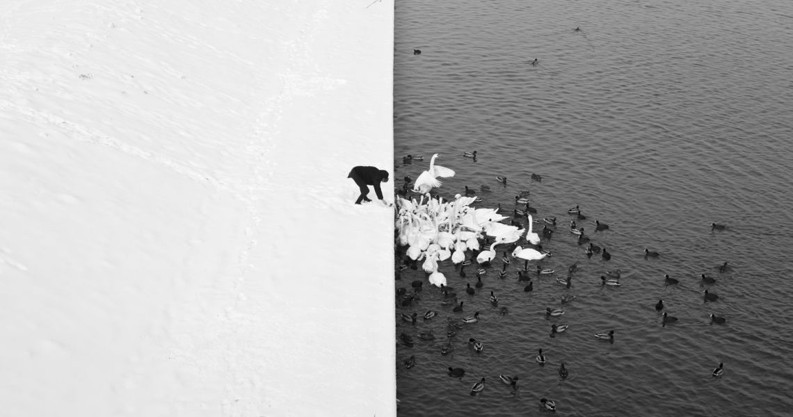 1. Marcin Ryczek A Man Feeding Swans in the Snow